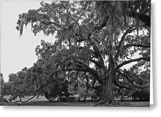 Moss Green Greeting Cards - Sprawling Live Oak I I Greeting Card by DigiArt Diaries by Vicky B Fuller