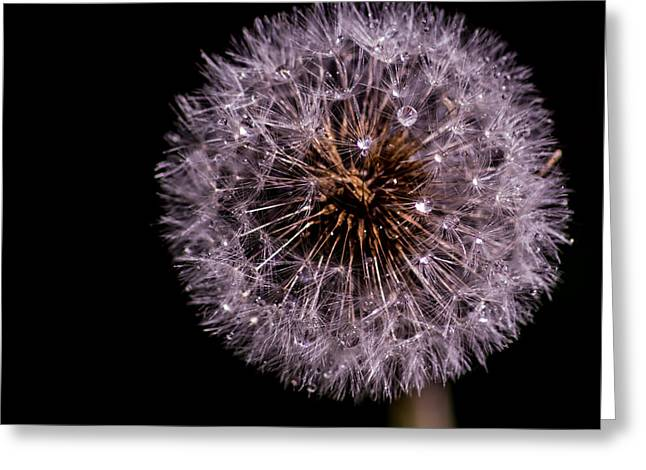 Water Spray Greeting Cards - Sprayed Dandelion Greeting Card by Martin Newman