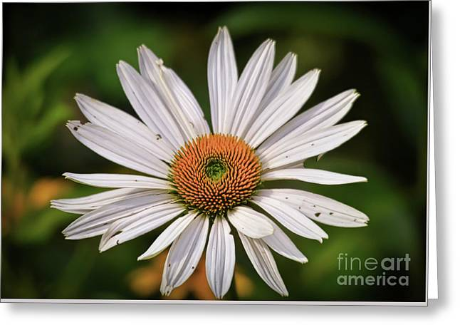 Nature Center Greeting Cards - Spread Your Petals Greeting Card by Kerri Farley
