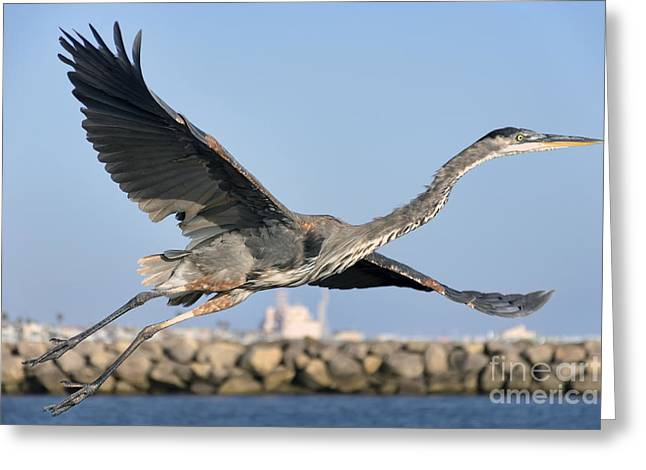 California Beaches Greeting Cards - Spread Your Wings Greeting Card by Eddie Yerkish