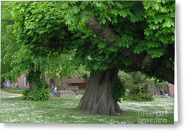 Virgin Mary Greeting Cards - Spreading Chestnut Tree Greeting Card by Ann Horn