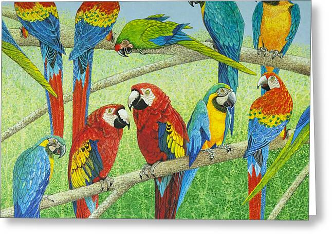 Macaw Art Greeting Cards - Spreading the news Greeting Card by Pat Scott