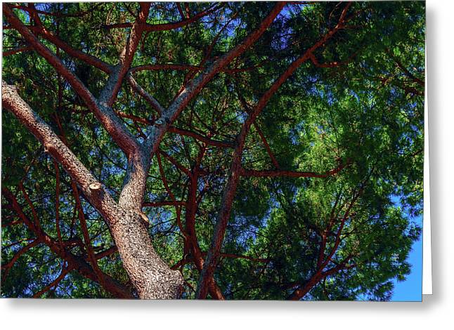 Spreading Trees Provide Shade And Coolness On A Hot Summer Day Greeting Card by George Westermak