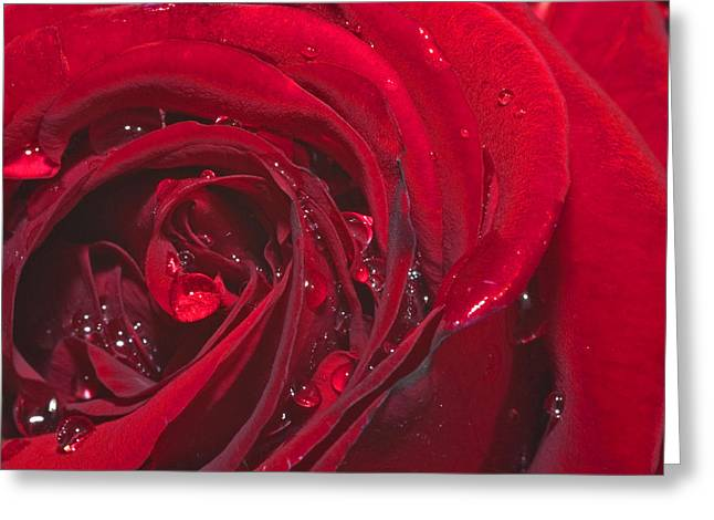 Rose Petal Heart Greeting Cards - Spring 2 Greeting Card by Kenton Smith