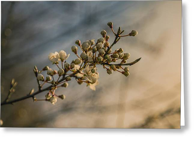 Blossoming Greeting Cards - Spring arrives Greeting Card by Chris Fletcher