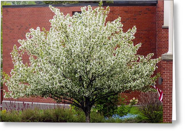 Maine Spring Greeting Cards - Spring at the Old Folks Home Greeting Card by William Tasker