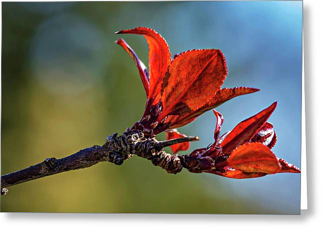Spring Awakening Greeting Card by Steve Harrington