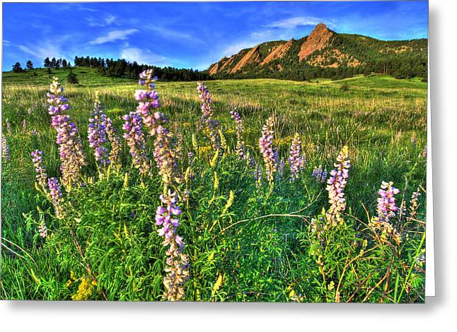 Cu Boulder Greeting Cards - Spring Beauty Greeting Card by Scott Mahon