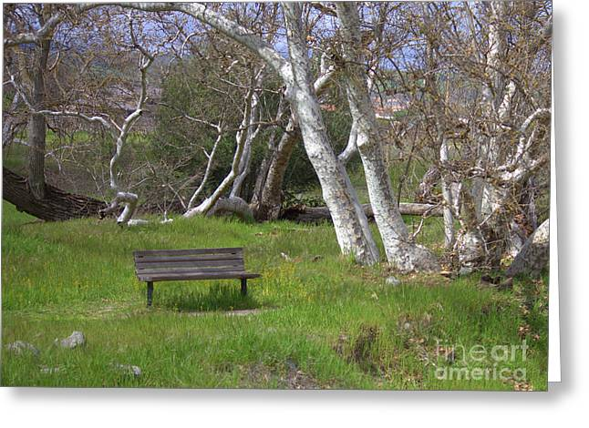 Livermore Greeting Cards - Spring Bench in Sycamore Grove Park Greeting Card by Carol Groenen