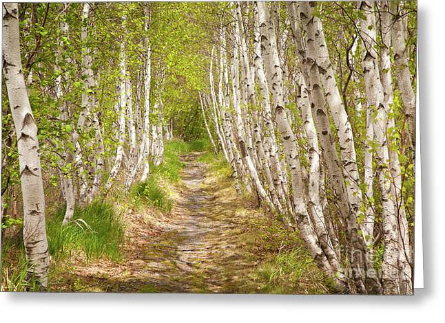 Spring Birch Greeting Card by Susan Cole Kelly