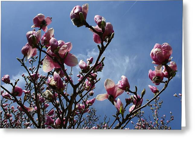 Spring Blooms 2010 Greeting Card by Anna Villarreal Garbis