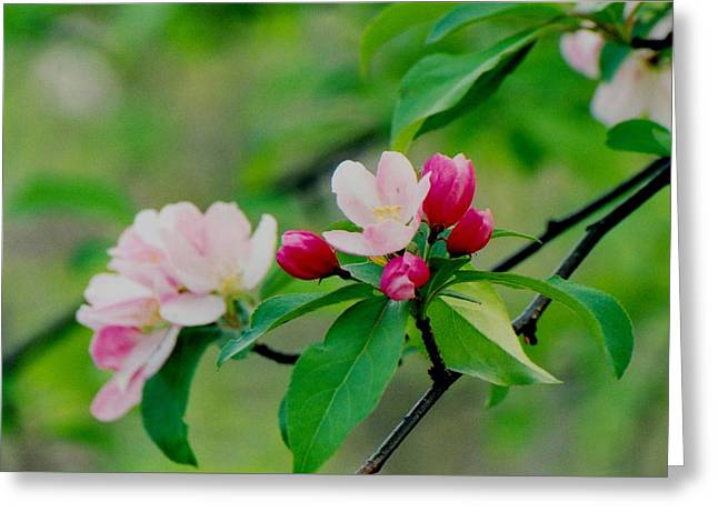 Spring Blossom Greeting Card by Juergen Roth