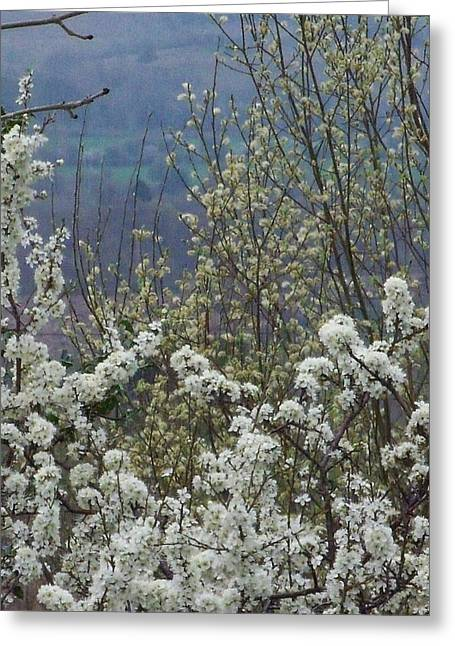 Easter Greeting Cards - Spring Blossom Greeting Card by Sadhbh Farren