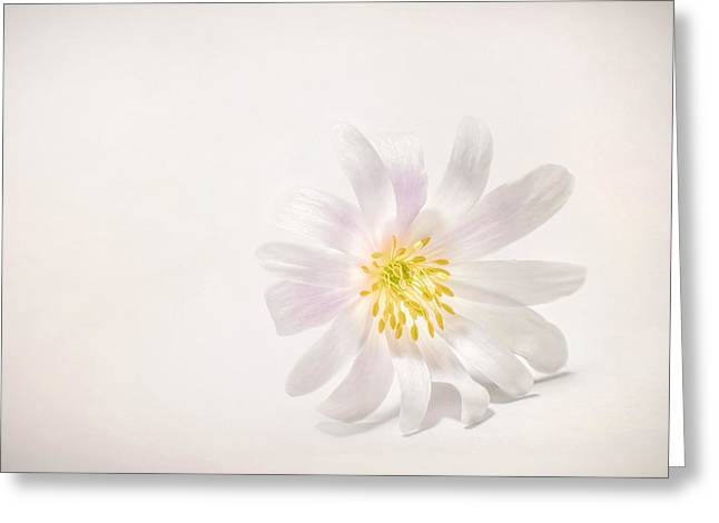Spring Blossom Greeting Card by Scott Norris