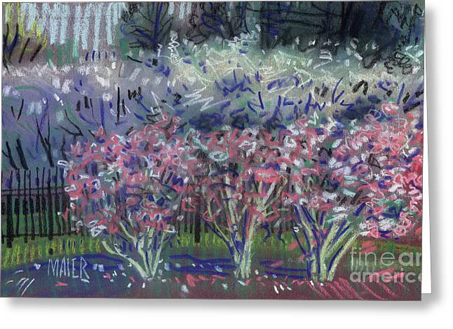 Spring Pastels Greeting Cards - Spring Blossoms Greeting Card by Donald Maier