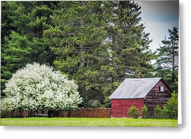 Saw Greeting Cards - Spring Blossoms on the farm Greeting Card by Paul Freidlund