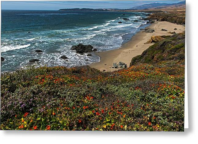 Big Sur Greeting Cards - Spring Brings Colorful Wildflowers On The PCH  Greeting Card by Willie Harper