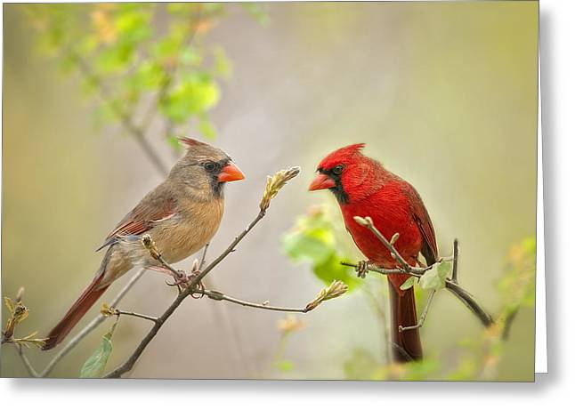 Male Northern Cardinal Greeting Cards - Spring Cardinals Greeting Card by Bonnie Barry