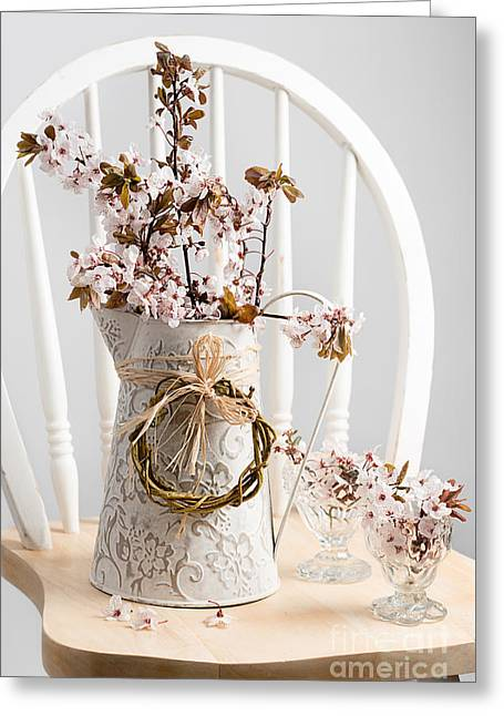 Spring Cherry Blossom On Chair Greeting Card by Amanda And Christopher Elwell