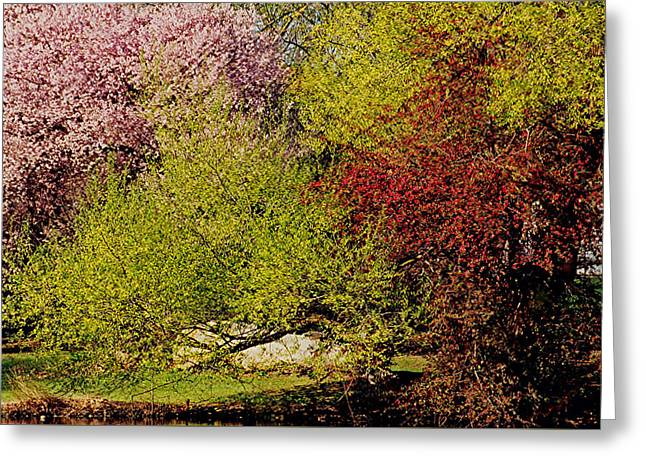 Spring Colors Greeting Card by Juergen Roth
