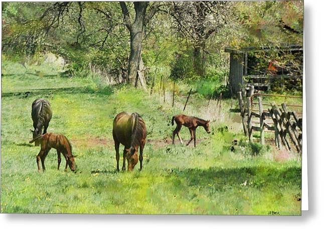 Spring Colts Greeting Card by John Robert Beck