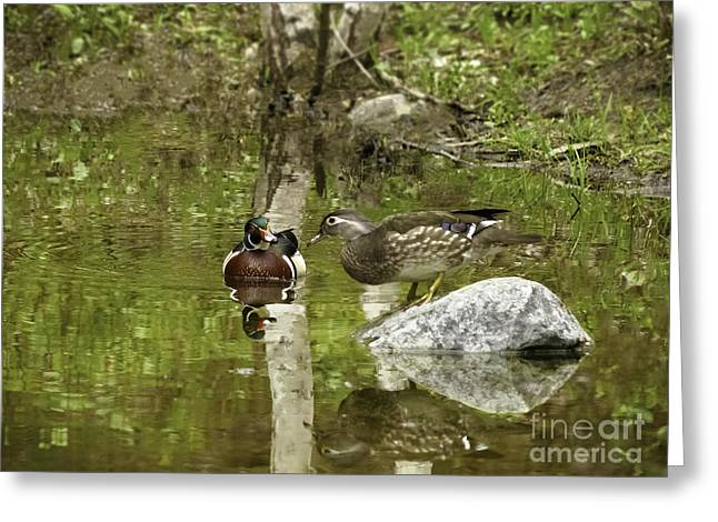 Hunting Bird Greeting Cards - Spring Courtship Greeting Card by TAPS Photography
