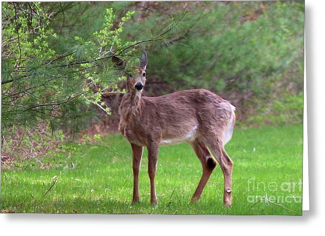 Beauty Greeting Cards - Spring Curiosity  Greeting Card by Neal  Eslinger