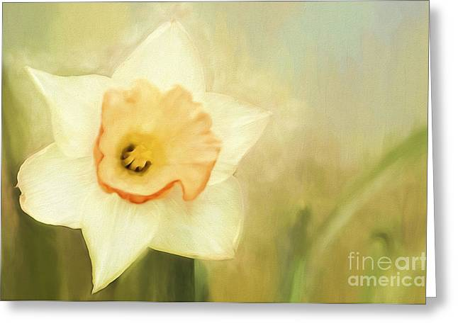 Florescence Greeting Cards - Spring Daffodil Greeting Card by Darren Fisher