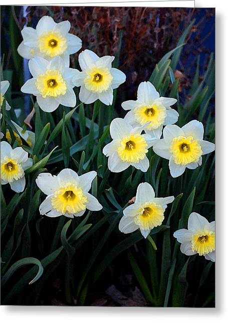 Jame Hayes Greeting Cards - Spring Daffodills Greeting Card by Jame Hayes