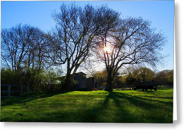 Sheds Greeting Cards - Spring Dawning Greeting Card by Dianne Cowen