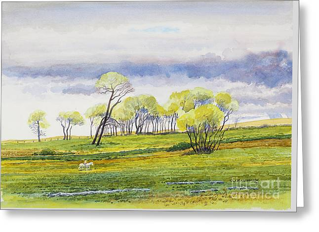 Lone Horse Paintings Greeting Cards - Spring Day Rider Greeting Card by James Robert MacMillan