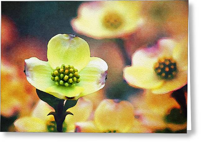 Spring Dogwood Greeting Card by Moon Stumpp