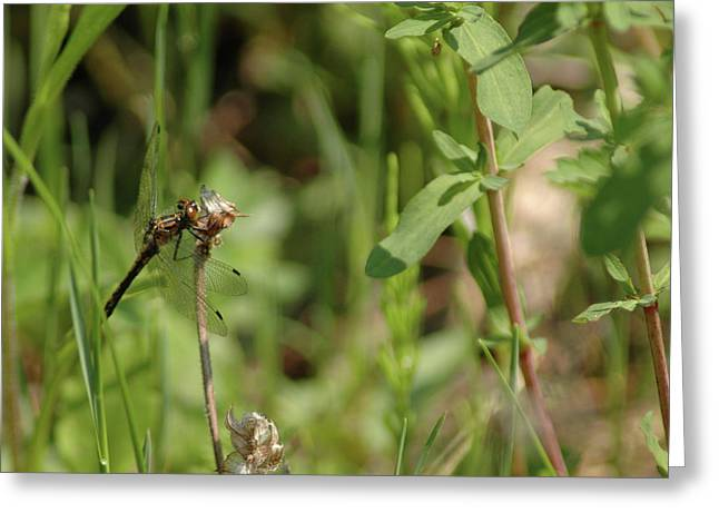 Nature Center Pond Greeting Cards - Spring Dragonfly Greeting Card by LeeAnn McLaneGoetz McLaneGoetzStudioLLCcom