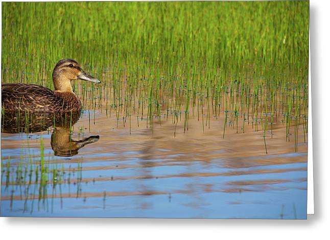 Spring Duck Greeting Card by Karol Livote
