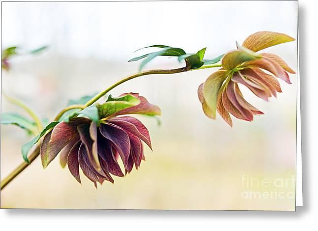Garden Art Pyrography Greeting Cards - Spring Greeting Card by Eiwy Ahlund
