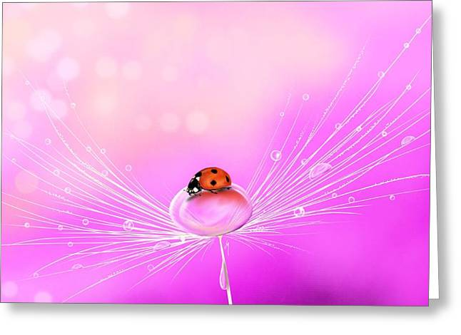 Waterdrops Greeting Cards - Spring elegance Greeting Card by Veronica Minozzi