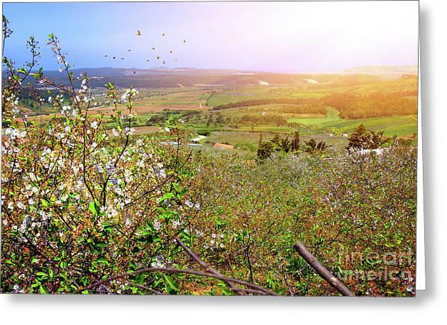 Spring Field Greeting Card by Carlos Caetano