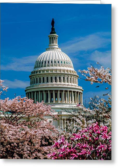 Best Sellers -  - Installation Art Greeting Cards - Spring flower on Capitol Hill Greeting Card by Richard Nowitz