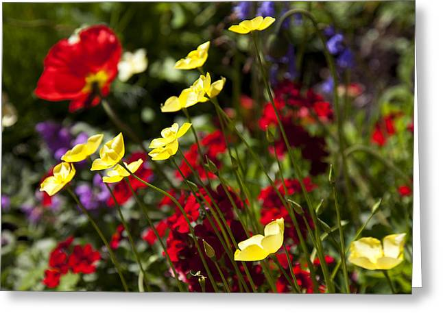 Red Flowers Greeting Cards - Spring Flowers Greeting Card by Garry Gay