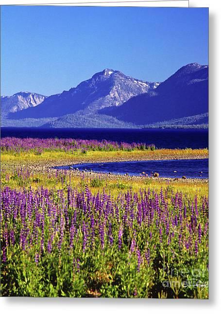 Spring Flowers Lake Tahoe Greeting Card by Vance Fox