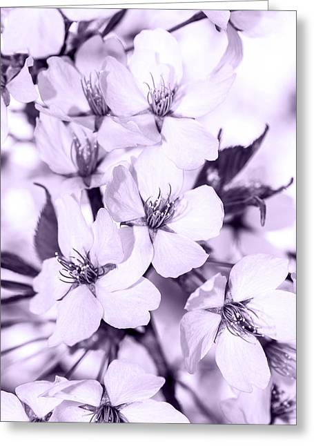 Springflowers Greeting Cards - Spring flowers on branch Greeting Card by Toppart Sweden