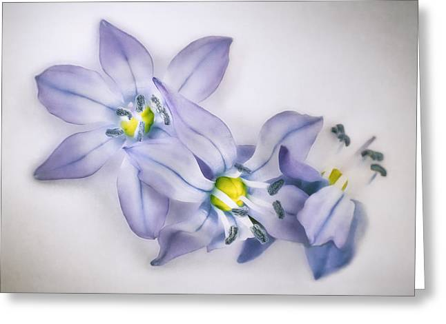 Spring Flowers On White Greeting Card by Scott Norris