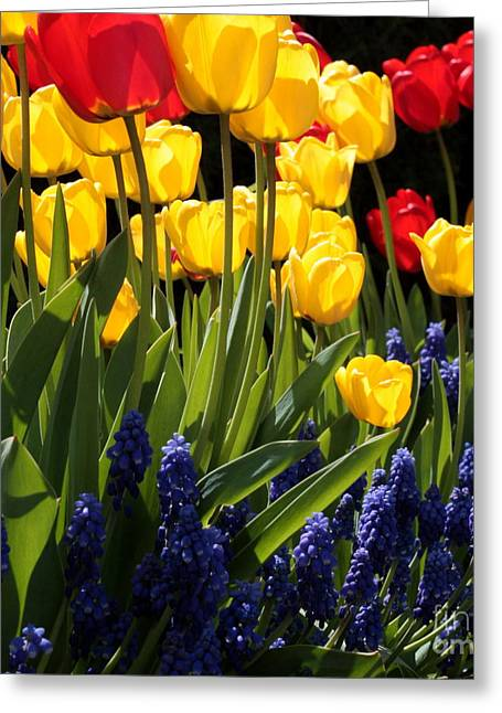 Brightly Colored Greeting Cards - Spring Flowers Square Greeting Card by Carol Groenen