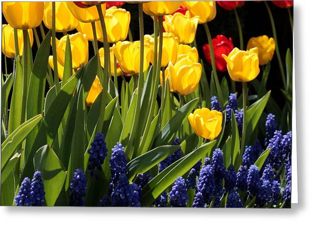 Spring Flowers Square Greeting Card by Carol Groenen