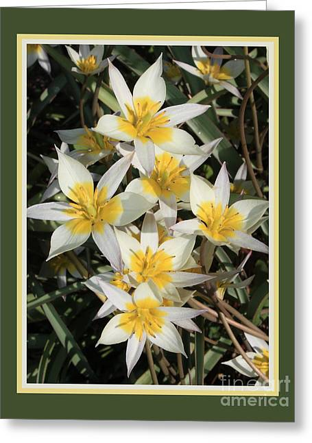 Moss Green Greeting Cards - Spring Flowers with Green Border Greeting Card by Carol Groenen