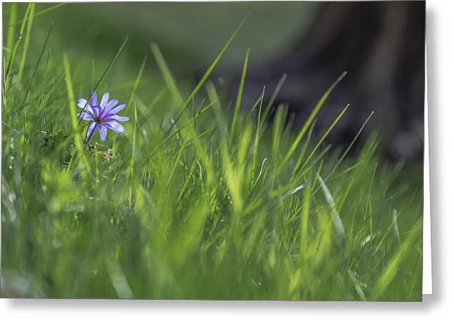 Flower Photography. Nature Greeting Cards - Spring garden Greeting Card by Chris Fletcher