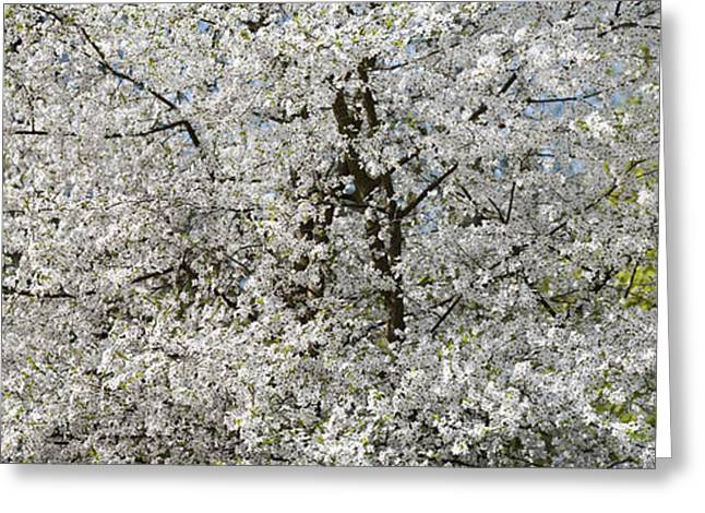 Blooms Greeting Cards - Spring Glory Greeting Card by Tim Gainey