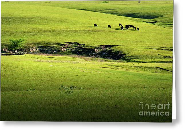 Spring Grazing Greeting Card by Fred Lassmann
