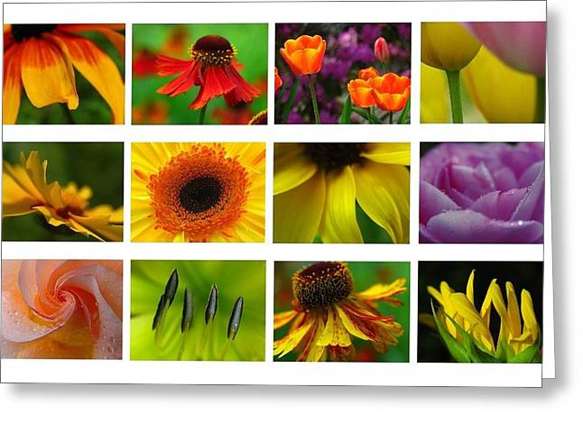 Sneezeweed Greeting Cards - Spring Greetings Greeting Card by Juergen Roth