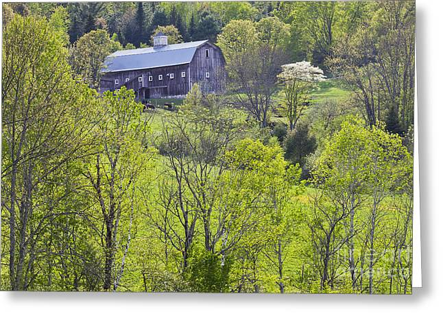Wooden Building Greeting Cards - Spring Hillside Barn Greeting Card by Alan L Graham